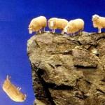 sheep-sq